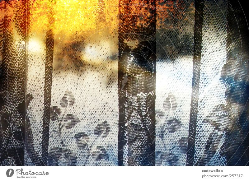 snowy sunset Window Esthetic Exceptional Cold Warmth Yellow Black White Idyll Curtain Winter Leaf Colour photo Multicoloured Interior shot Experimental Abstract