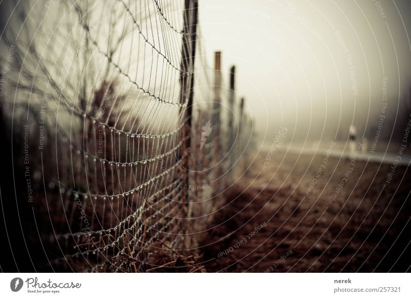 zaungast Adventure Expedition Nature Landscape Bad weather Ice Frost Grass Street Fence Wire fence Drops of water Pole Exceptional Threat Dirty Dark Creepy