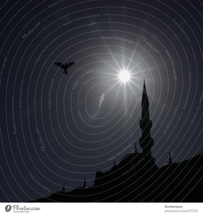 Animal Religion and faith Bird Tower Belief Pigeon Turkey Istanbul Islam Humble Mosque Moslem Minaret Galata Bridge
