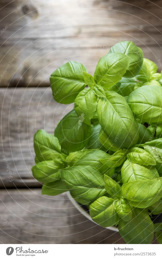 Basil in a pot Food Herbs and spices Organic produce Vegetarian diet Pot Healthy Eating Agricultural crop Garden Wood Fresh Natural Green Herb garden Basil leaf