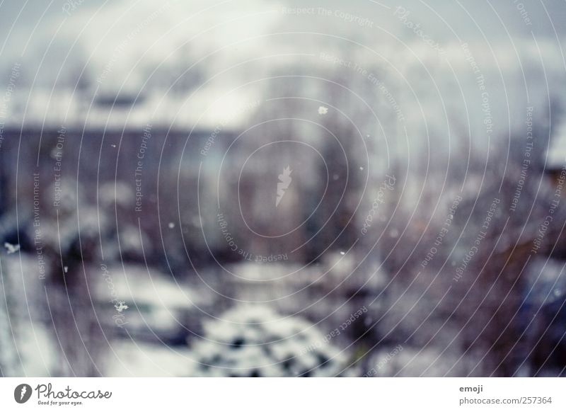 snowflakes Nature Winter Snow Snowfall Cold Small Snowflake Colour photo Exterior shot Deserted Day Blur Shallow depth of field