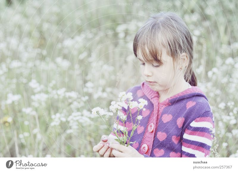 Human being Child Nature Girl Summer Flower Face Eyes Meadow Environment Head Grass Hair and hairstyles Spring Bright