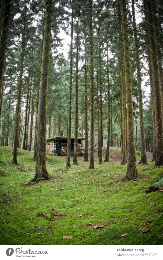 Nature Green Tree Plant Leaf House (Residential Structure) Forest Graffiti Wood Grass Concrete Hut Moss Firewood Carpet of moss