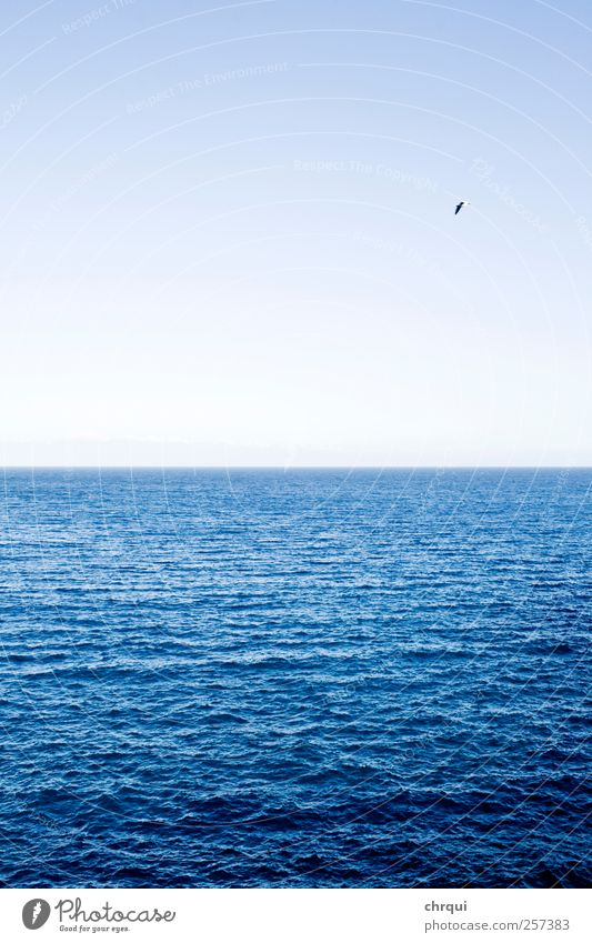 Blue ocean with bird Environment Landscape Air Water Earth Sky Cloudless sky Horizon Summer Beautiful weather Waves Coast Lakeside Ocean Breathe Relaxation