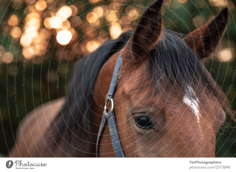 Brown horse with sad eyes Nature Animal Autumn Emotions Authentic Beautiful weather Friendliness Horse Farm Delicate Animal face Expression Farm animal Chestnut