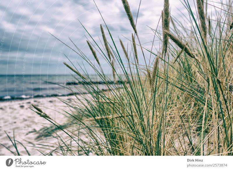 Beach near Marstal / Denmark Vacation & Travel Tourism Trip Far-off places Summer Summer vacation Ocean Island Waves Environment Landscape Clouds Horizon