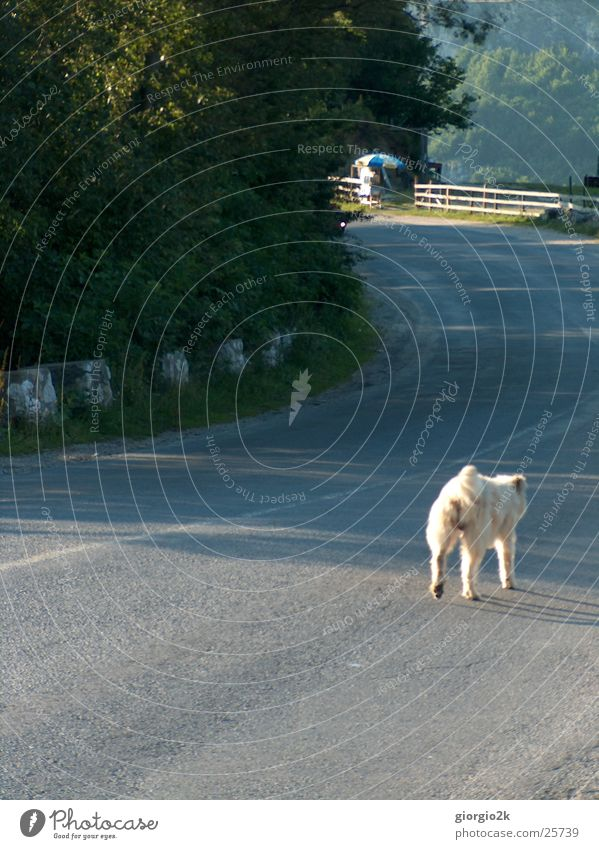 Tree Sun Loneliness Street Dog Lanes & trails Wild animal Romania Carpathians