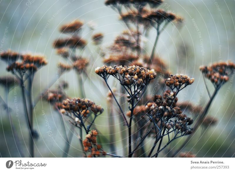 ... Environment Nature Autumn Bad weather Grass Bushes To dry up Cold Longing Colour photo Subdued colour Exterior shot Deserted Shallow depth of field