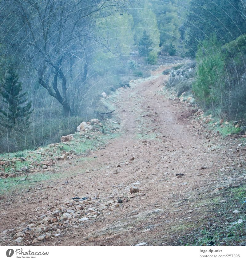 Nature Old Plant Loneliness Environment Autumn Mountain Grass Lanes & trails Air Dream Moody Earth Weather Fog Hiking