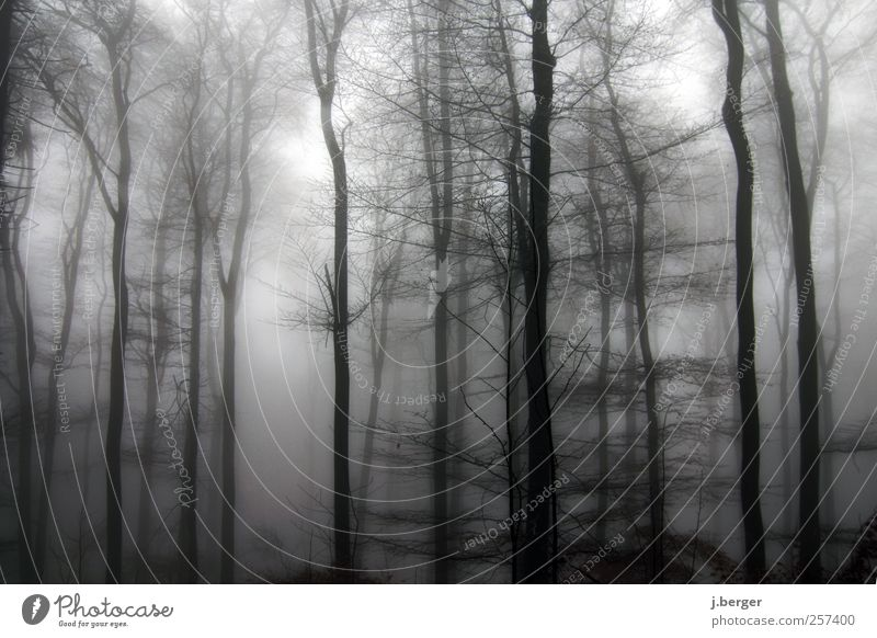 forest Winter Nature Landscape Plant Bad weather Fog Rain Ice Frost Tree Forest Freeze Creepy Gray Black White Haze Colour photo Subdued colour Exterior shot