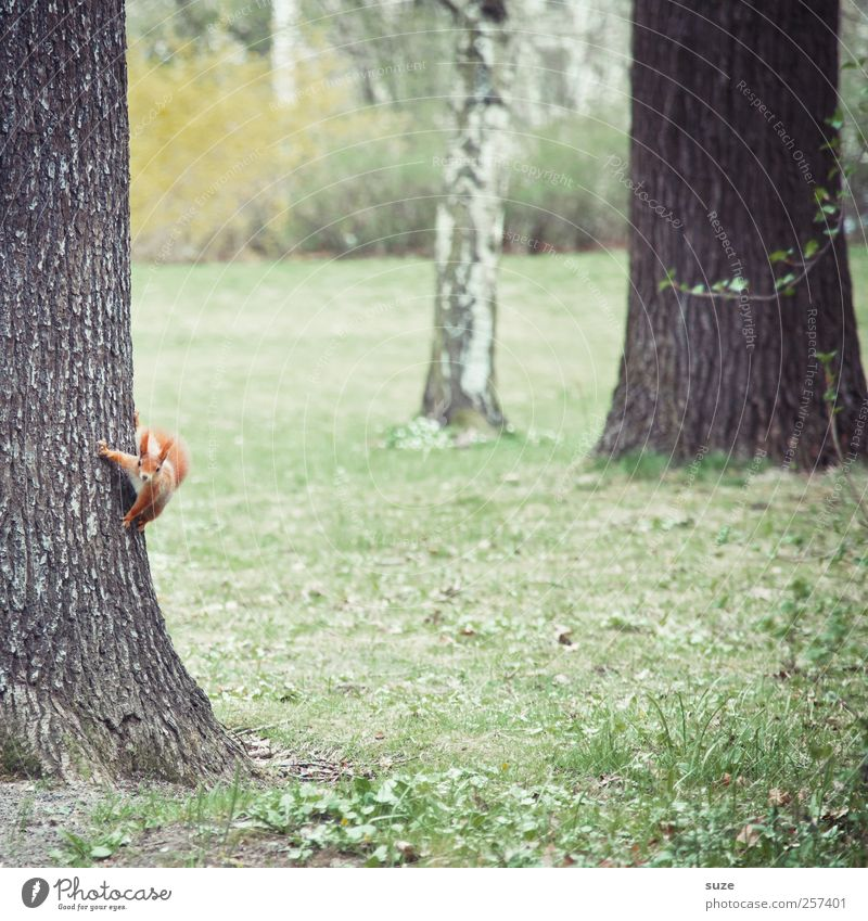 Nature Beautiful Green Red Animal Environment Meadow Autumn Funny Small Brown Park Wild animal Elements Cute Curiosity