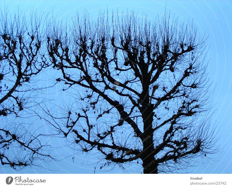 Sky Tree Blue Autumn