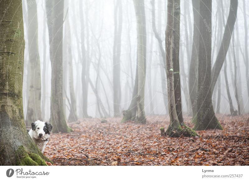 Who's that? Leisure and hobbies Nature Landscape Winter Fog Forest Animal Pet Dog Animal face 1 Observe Looking Stand Esthetic Red Moody Curiosity Interest