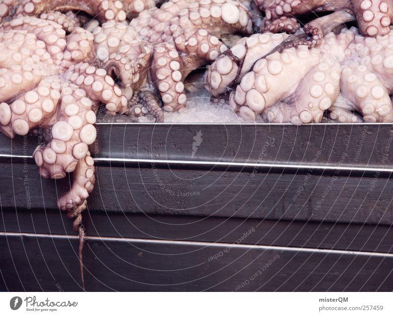 Breakfast! Art Esthetic Fish Fishery Fisherman Fishing port Fish market Fishing quota Octopods Squid Culinary Delicious Death Animal Offer Fresh Markets