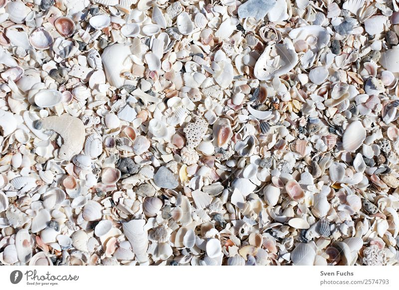 Mussel shells on the beach Design Vacation & Travel Summer Beach Ocean Wallpaper Nature Sand Water Coast Gray White Florida Americas USA Sanibel Island