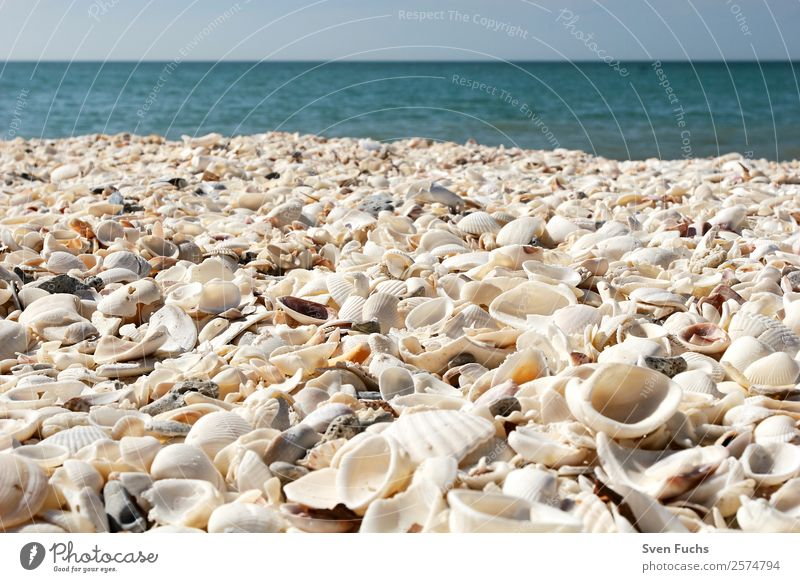 Mussel shells on the beach Vacation & Travel Summer Beach Ocean Nature Sand Water Coast Maritime Wet Blue Turquoise White Emotions Florida Americas USA