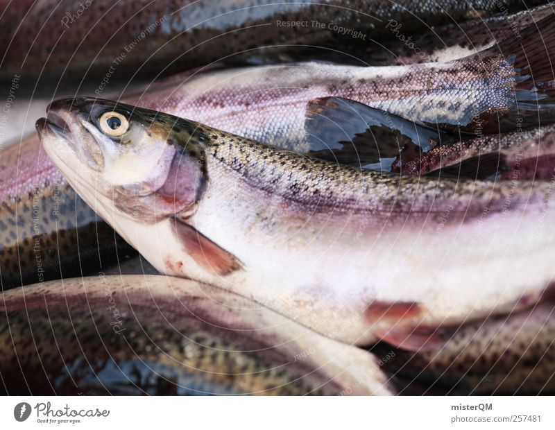Fish for breakfast. Animal Esthetic Fishery Fish eyes Death Trout Disgust Markets Market day Fishing quota Food Delicacy Delicious Colour photo Subdued colour