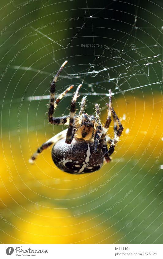 Nature Green White Animal Forest Black Yellow Autumn Garden Park Field Beautiful weather Transparent Spider Spider's web Spin