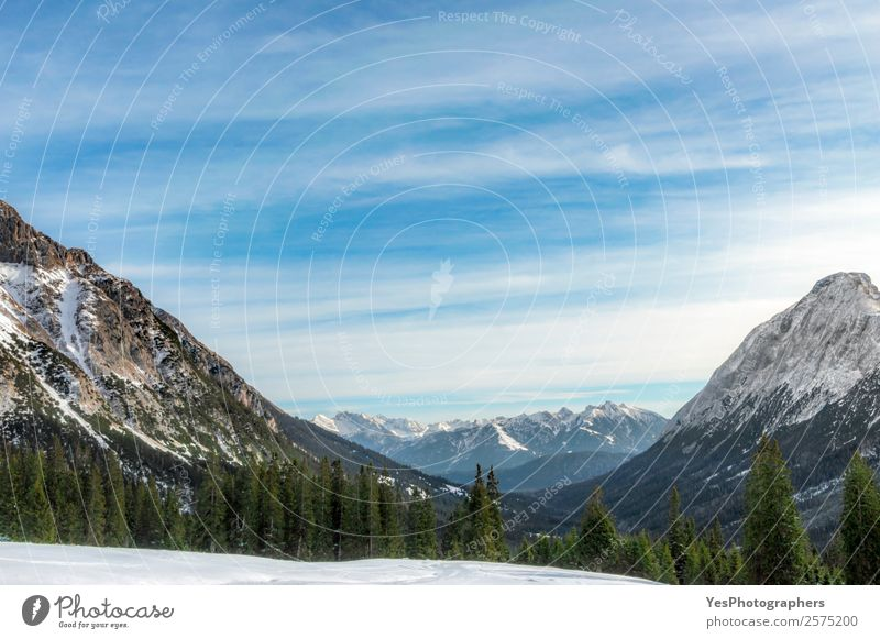 Snow-capped mountains and fir forests Nature Vacation & Travel Green Landscape Tree Forest Winter Mountain Tourism Weather Europe Peak Alps Snowcapped peak