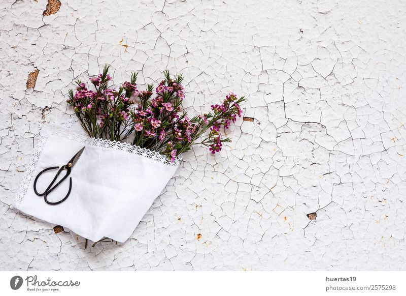 Flowers on white background. Flat lay Nature Green White Leaf Love Natural Style Feasts & Celebrations Copy Space Above Design Birthday Gift Card Violet