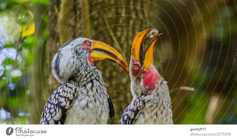 Play with me!!! Vacation & Travel Trip Adventure Safari Expedition South Africa Animal Wild animal Bird Animal face Wing 2 Pair of animals Movement Discover
