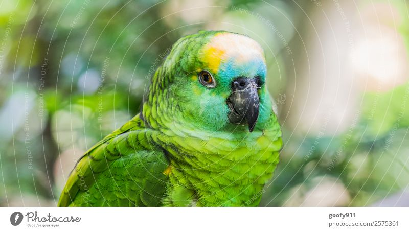 Amazon Parrot Elegant Vacation & Travel Tourism Trip Adventure Far-off places Safari Expedition Animal Wild animal Bird Animal face Wing Pelt Zoo Parrots