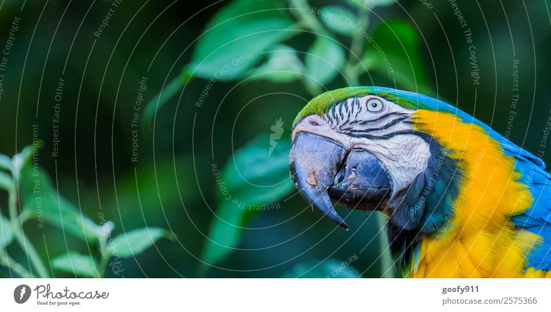 Vacation & Travel Blue Green Animal Forest Yellow Natural Tourism Trip Elegant Wild animal Esthetic Adventure Crazy Fantastic Wing