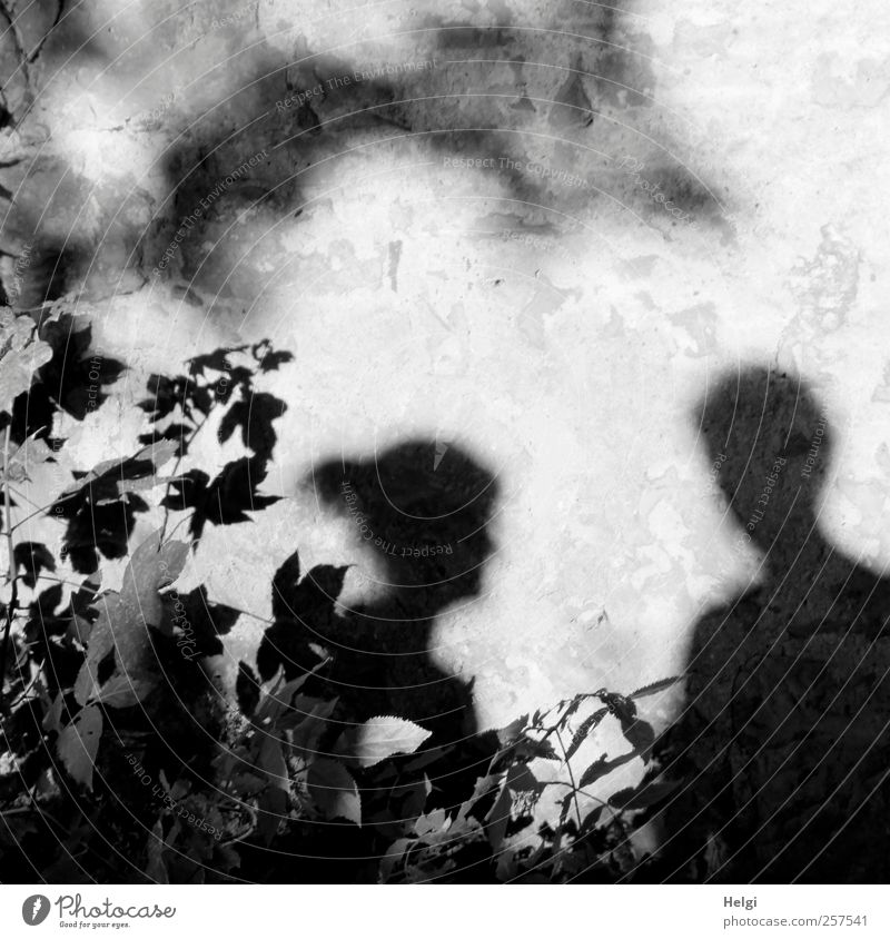 Chamansülz shadowy existence... Human being Masculine Woman Adults Man Head 2 45 - 60 years Environment Nature Plant Autumn Beautiful weather Leaf Garden