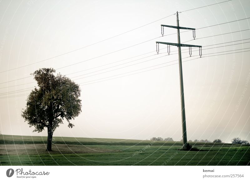 Arriving somewhere, but not here Environment Nature Landscape Plant Sky Autumn Tree Grass Meadow Field Electricity pylon High voltage power line Green Calm