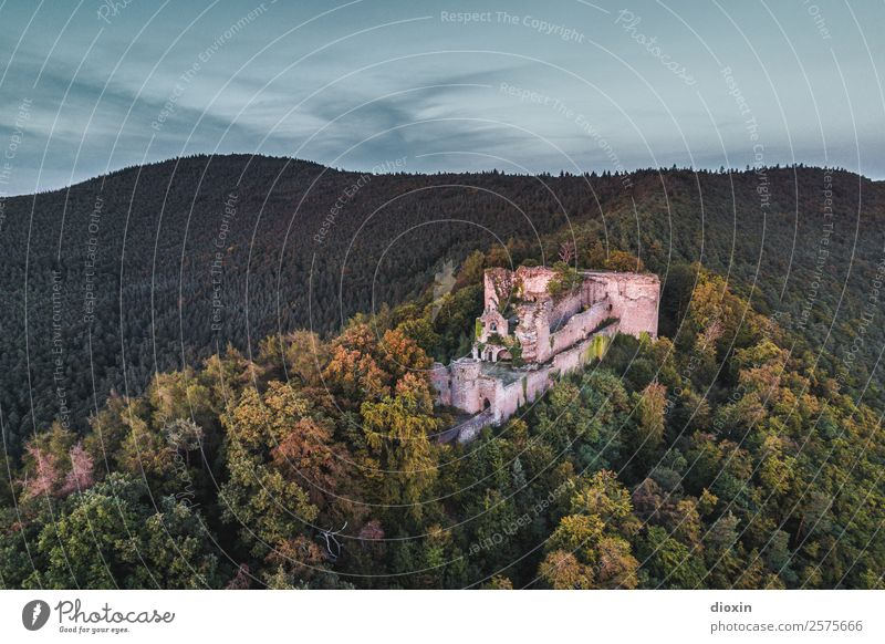 Neuscharfeneck Castle Vacation & Travel Tourism Trip Adventure Sightseeing Environment Nature Landscape Plant Tree Forest Mountain Palatinate forest