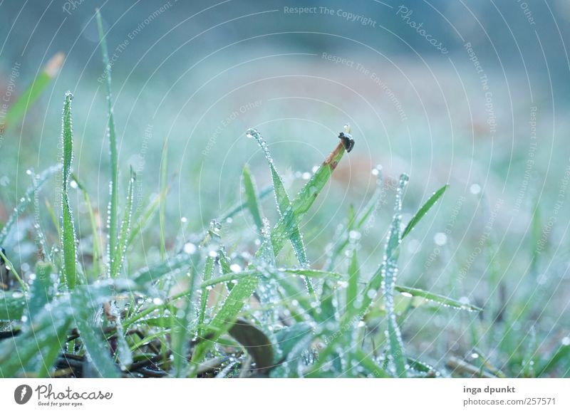 Nature Water Green Plant Autumn Meadow Cold Environment Landscape Emotions Grass Contentment Wet Fresh Drops of water Growth