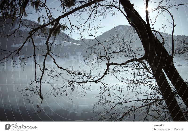 night space Environment Nature Landscape Water Sky Cloudless sky Sun Sunlight Winter Beautiful weather Fog Ice Frost Snow Tree Coast Lake Mountain lake Alps