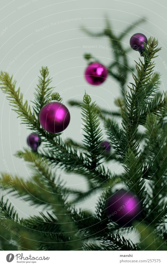 Christmas & Advent Green Tree Plant Small Flat (apartment) Christmas tree Violet Glitter Ball Thorny Christmas decoration Twigs and branches