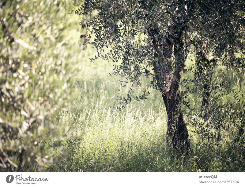 Nature Green Tree Plant Calm Environment Landscape Idyll Italy Paradise Remote Mediterranean Twilight Country life Peaceful Clearing