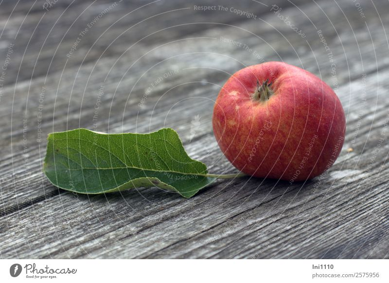 Apple with leaf Food Nature Plant Autumn Leaf Yellow Gray Green Orange Red White Apple tree leaf Apple harvest Early fall Autumnal Delicious Organic produce