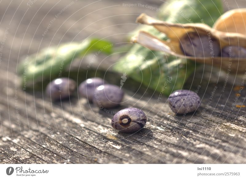 runner beans Food Vegetable Beans Lunch Nature Plant Sunlight Autumn Beautiful weather Agricultural crop Garden Blue Yellow Gray Green Violet Black White