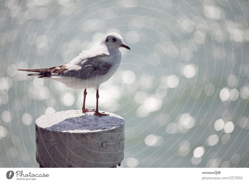 Vacation & Travel Ocean Animal Coast Bird Contentment Esthetic Idyll Vantage point Harbour Baltic Sea Seagull Summer vacation Mediterranean sea Pole Remote