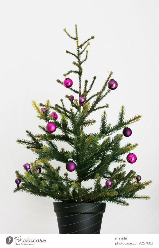 Christmas & Advent Green Tree Plant Decoration Branch Christmas tree Violet Sphere Fir tree Statue Glitter Ball Needle Christmas decoration Adorned Ornate