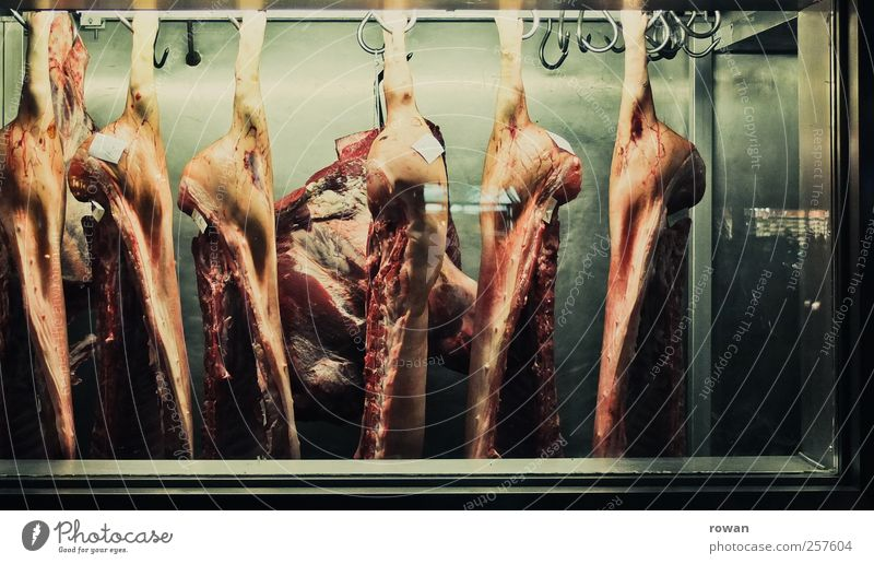 Green Red Cold Nutrition Food Overweight Hang Meat Iron Craftsperson Store premises Swine Sausage Exhibition Checkmark Event