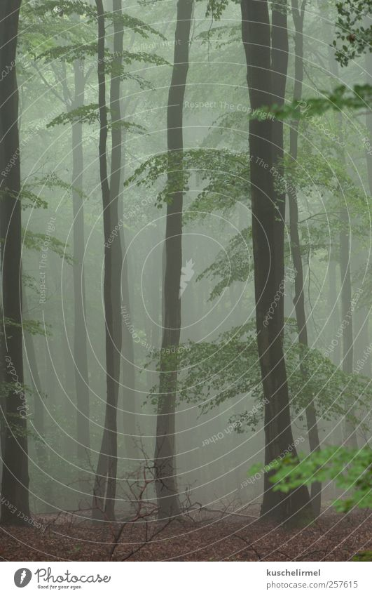 SummerFog Calm Meditation Nature Landscape Plant Earth Weather Bad weather Tree Forest Esthetic Dark Creepy Cold Brown Green Caution Serene Contentment