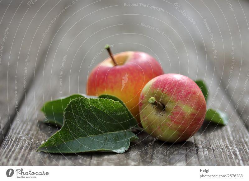delicious organic apples Fruit Apple Nutrition Organic produce Vegetarian diet Diet Leaf Garden Wood Lie Esthetic Fragrance Fresh Healthy Uniqueness Delicious