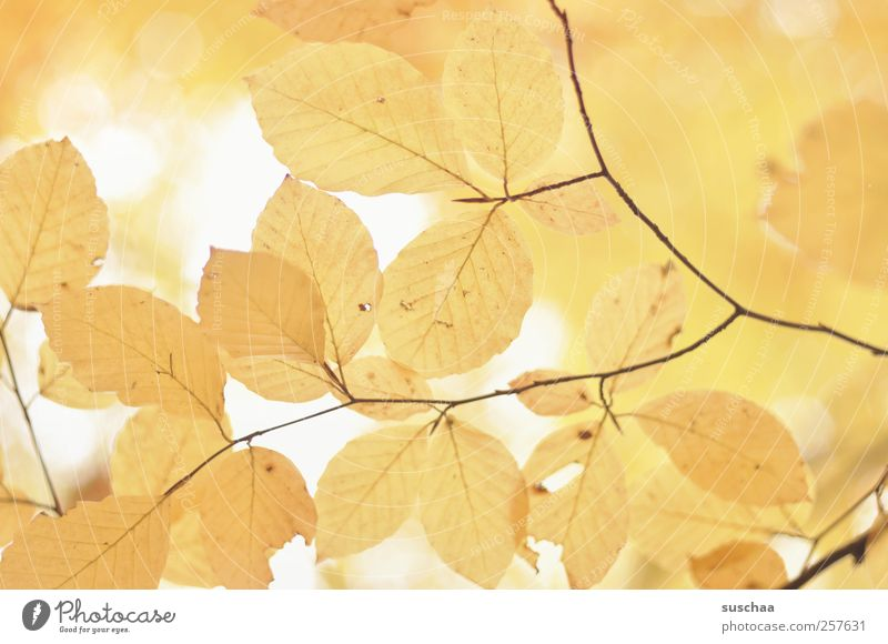 Nature Beautiful Leaf Environment Yellow Autumn Climate Light Pattern