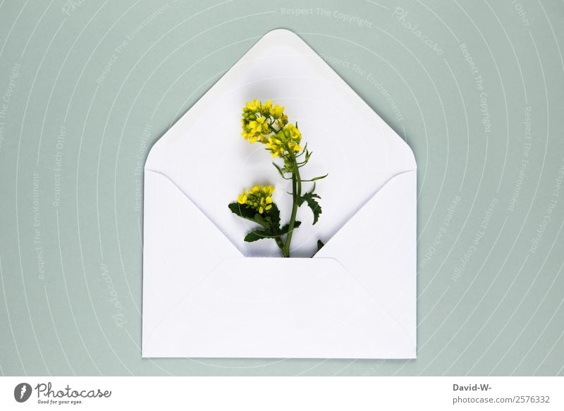 Flower greeting III Lifestyle Valentine's Day Mother's Day Wedding Birthday Human being Couple Art Environment Nature Plant Growth Love Canola Yellow