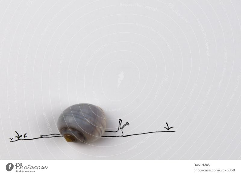 * pet* Art Environment Nature Spring Summer Beautiful weather Plant Animal 1 Crawl Snail Snail shell Slowly Calm Serene Time Drawing Self-made Creativity Funny