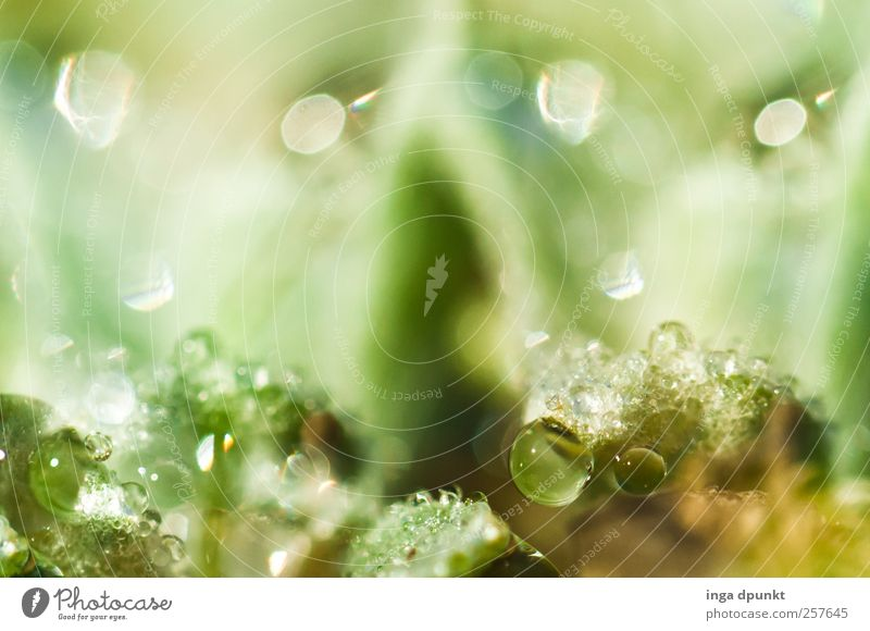 reflection Environment Nature Landscape Plant Elements Water Drops of water Grass Moss Dew Condense Exotic Fantastic Cold Green Illuminate Seeming Lighting