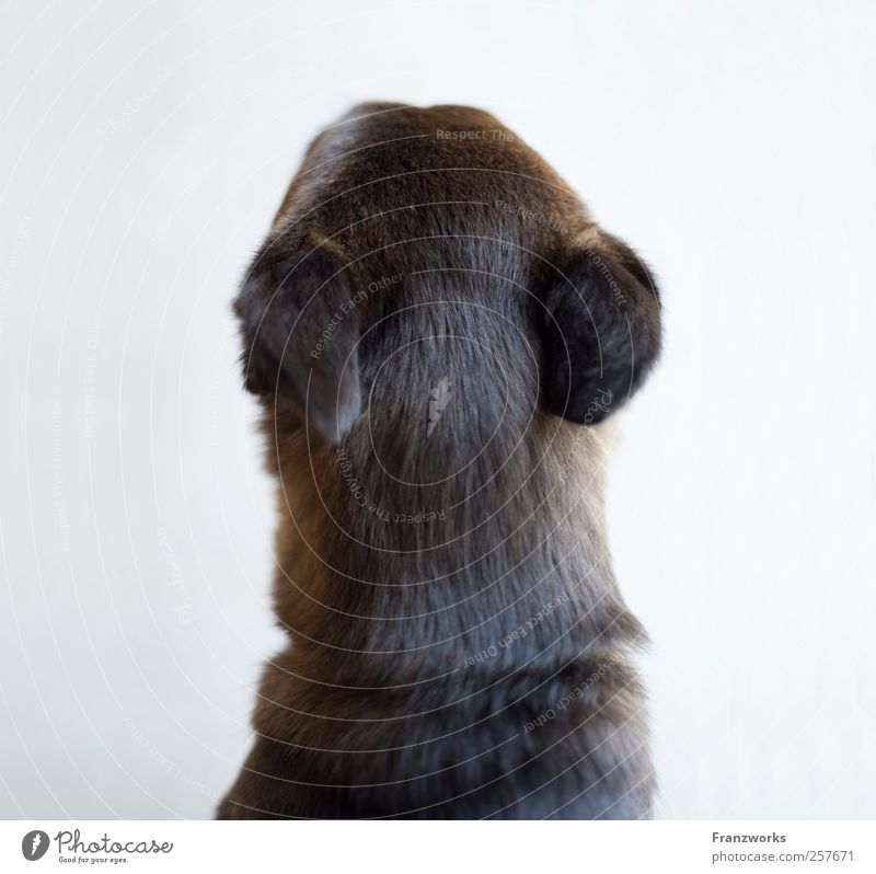 Identity II Animal Dog Pelt 1 Expectation Curiosity Nature Complex Irritation Foreign Exceptional Inverted Structures and shapes Quality Soft Reflection