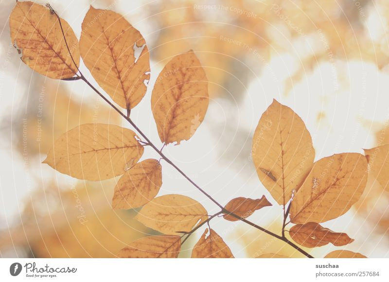 Nature Leaf Environment Autumn Air Gold Climate Rachis Plant