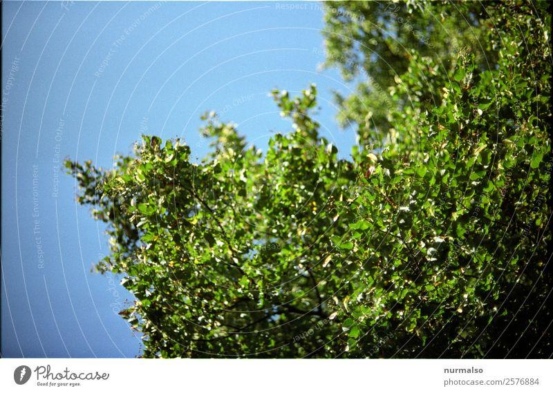 Nature Summer Plant Blue Green Tree Relaxation Animal Leaf Joy Forest Love Natural Feminine Happy Garden