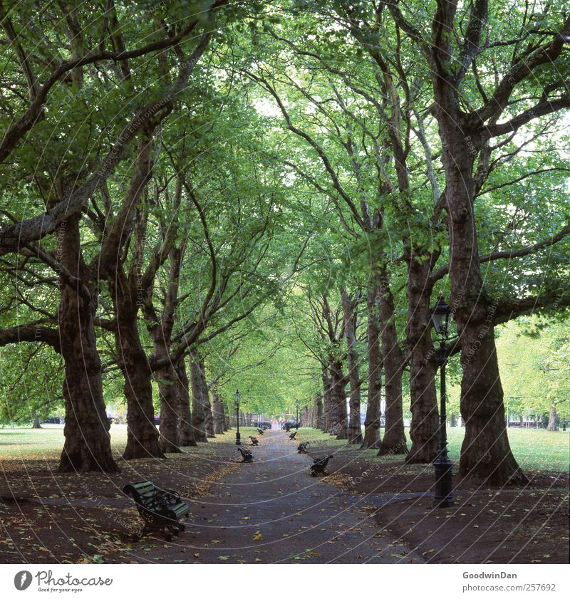 Nature Old City Tree Environment Cold Moody Park Large Esthetic Authentic Many Simple Downtown Capital city