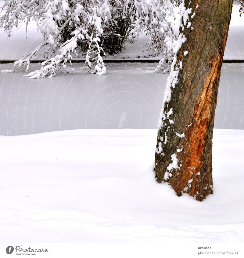 Nature Plant Tree Landscape Calm Winter Snow Ice Frost River River bank Brook